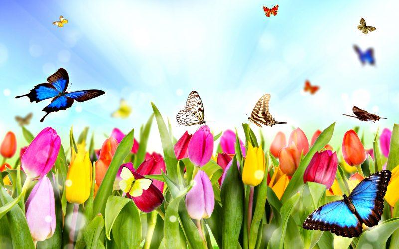 A képen tavaszi jelenet látható, melyen pillangó repül a virágokkal teli réten