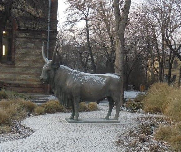 A képen az állatorvosi múzeum előtt álló, szarvasmarhát ábrázoló szobor látható