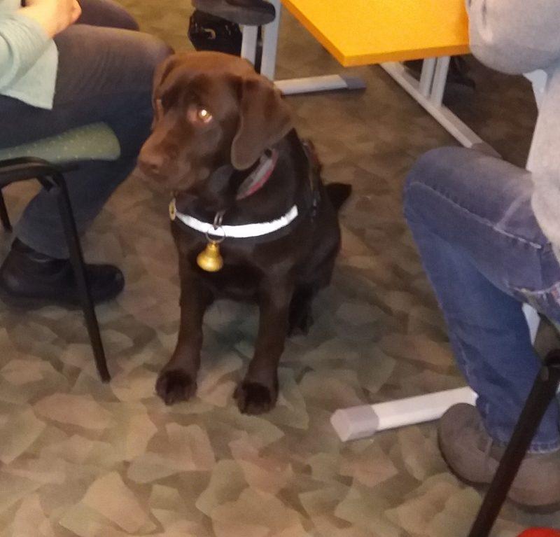 A fényképen Bonca, a bajnok kutyus látható