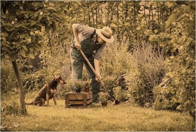 A képen egy kertészkedő ember látható