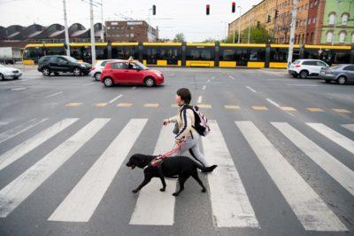 A kép forrása: http://www.barathegyisegitokutya.hu