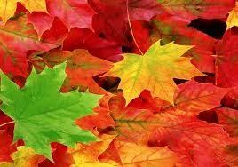 a képen: őszi szinekben pompázó falevelek vannak