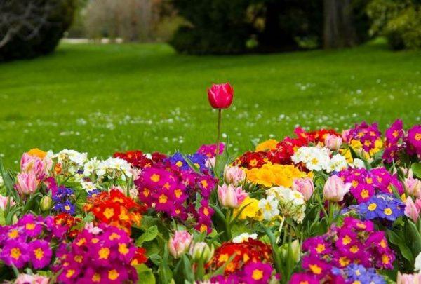 A képen egy virágos rét látható, sok színes virággal