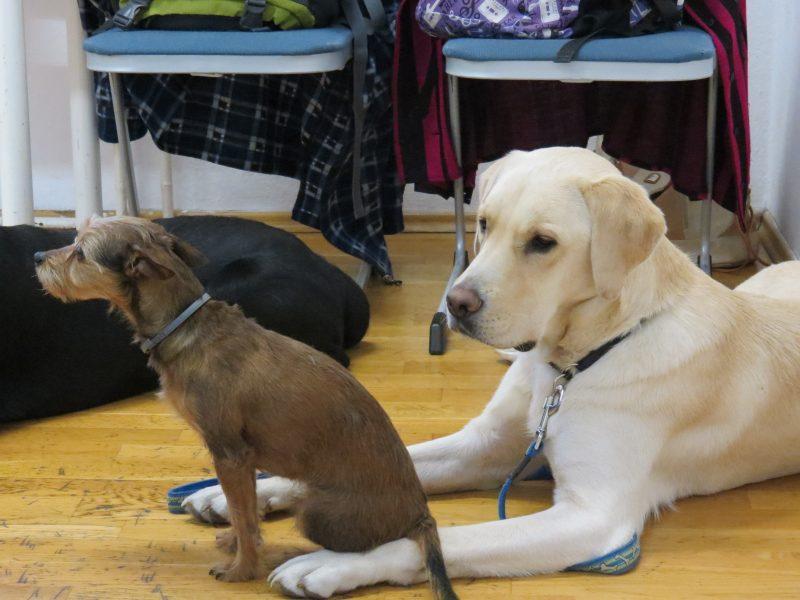 Az újpesti érzékenyítésen megjelent három segítő kutya látható a képen