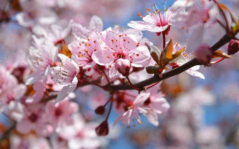 A képen egy virágos faág látható.
