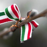 A képen egy nemzeti színű masni látható barkaágon.